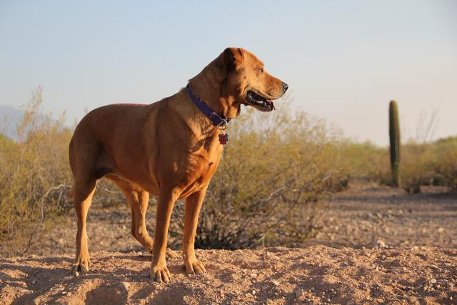 Taking your Dog on a Hike? Read this First!
