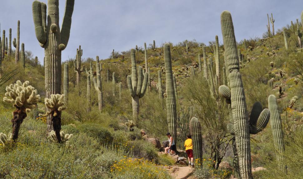 Phoenix Area Day Hikes