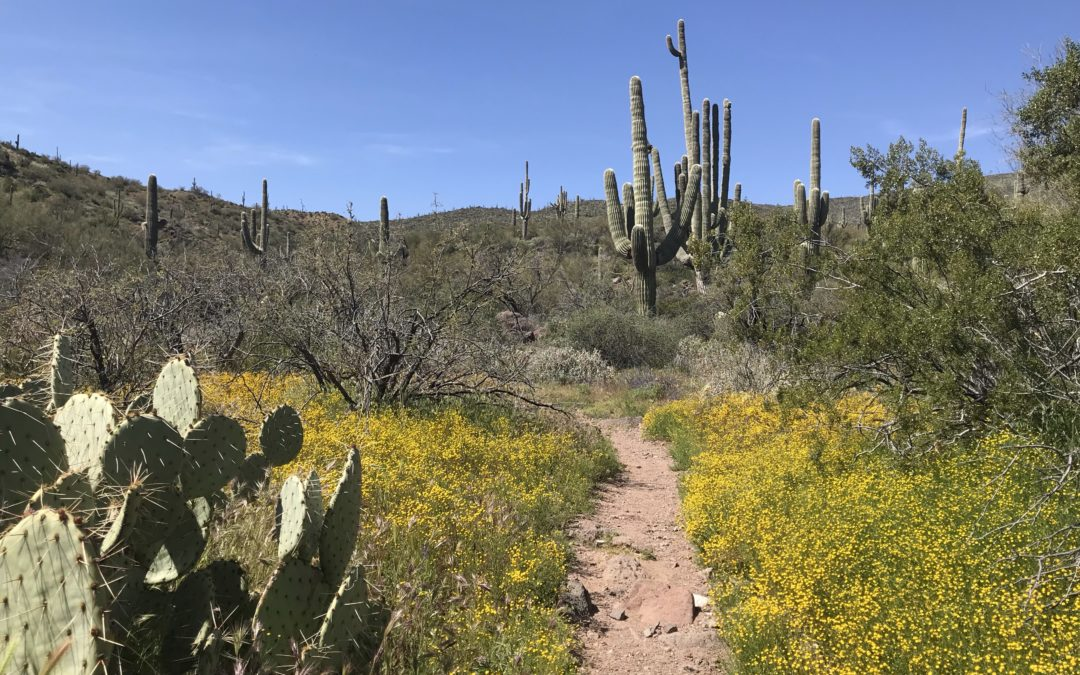 Phoenix Wildflower Hikes